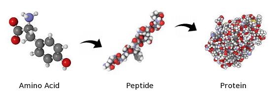 百年诺贝尔奖证肽科研改写人类寿命 神盾局再创功能肽国际专利
